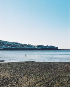 Mrs Heron scooping through the fresh silt after the tide had gone out finding tasty morsels I'm sure.  That's Appledore across the water.     #analog #filmisnotdead #shootfilm #film #35mmphotography #filmphotography#filmcamera #filmphoto #filmstagram#filmforever #filmcommunity #35mmers #35mmfilm  #lovefilm #analogphotography #analogvibes #analogfilm  #olympus #beach #instow #nature #wildlife #heron
