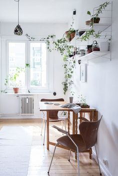 Small Nordic style kitchen dining area brought to live by an exuberant trailing vine on a high shelf.