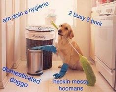 Domestic doggo funny pics, funny gifs, funny videos, funny memes, funny jokes. LOL Pics app is for iOS, Android, iPhone, iPod, iPad, Tablet