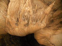 Mammoth_Cave Mammoth Cave