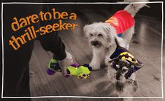Dress your pet with Halloween costumes and accessories from PetSmart! With Halloween collars, leashes and toys, we have what you need to celebrate safely with your dog, cat or small pet.