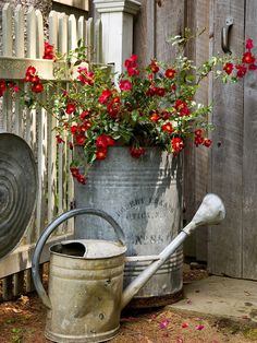 Love old cans for planters...
