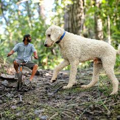 The Whimsical Adventures Of A Photographer And His Giant Dog: http://www.randomzebra.com/the-whimsical-adventures-of-a-photographer-and-his-giant-dog/  #photography #photoshop
