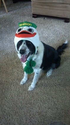 Go Dog Ducks! #GoDucks