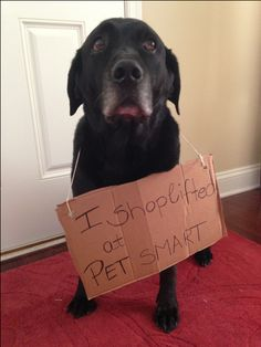 I shoplifted at PETSMART. Dog Shaming. Dallas used to do this when he was a puppy.