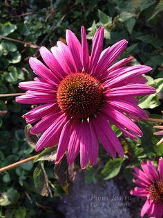http://www.pienilintu.blogspot.fi/2014/10/still-blooming.html