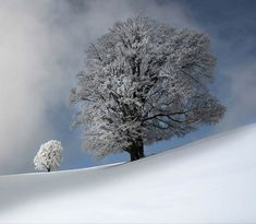 All creatures great and small - by Kent Shiraishi