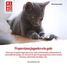 #KiwoKonsejos Y juega con él como parte de su rutina diaria. #kiwoko #cat #kitten #game