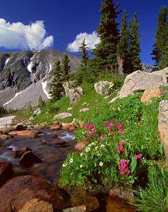 Lake Isabelle Wildflowers, Colorado, Rocky Mountain Fine Art