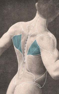 deltoid, trapezius, and latissimus dorsi (cropped and flipped), Atlas of Anatomy for Artists, 1947