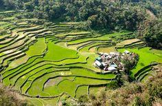 terrazas, arroz, verde, paisajes, impresionantes, vista, colorido, lineas, geometrías, Banaue, Golf Courses, Pictures, Beautiful Landscapes, Green Rice, Travel Photography, Backpacking, Decks, Impressionism