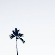 Lone palm // via @katrinaparker