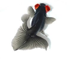 Black and red butterfly telescope goldfish.