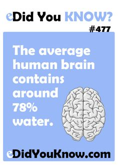 The average human brain contains around water. So, imagine if the cure for Alzhimers and other brain diseases is as simple as DRINKING MORE WATER? Creepy Facts, Wtf Fun Facts, True Facts, Funny Facts, Odd Facts, Random Facts, Science Trivia, Cool Science Facts, The More You Know