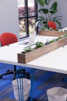 Haven Interior Design: Heatworks   Modern Office   Office Interior Design    Succulents   Walnut
