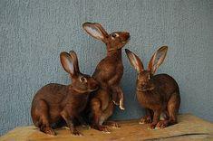 králik zajačí Rabbit, Animals, Bunny, Rabbits, Animales, Animaux, Bunnies, Animal, Animais