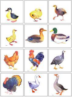 Птицы: картинки для детей