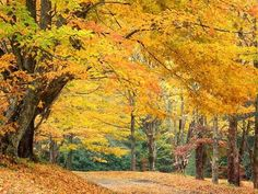 fall in kentucky | Picture of Fall in Kentucky posted in the Barbourville, KY gallery