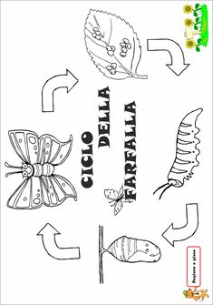 Animal Crafts, Life Cycles, Worksheets, Activities For Kids, Butterfly, Education, Mamma, Halloween, Butterfly Metamorphosis