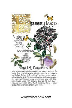 Plant Magic, Magic Herbs, Herbal Magic, Witchcraft Herbs, Green Witchcraft, Magick, Wiccan, Witch Herbs, Charms