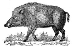 In Celtic culture, the boar is a symbol of strength, endurance, fearlessness, protection in battle, and fertility.