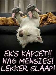 Wish Quotes, Cute Quotes, Best Hypoallergenic Dogs, Afrikaanse Quotes, Goeie Nag, Angel Prayers, Birthday Wishes Quotes, Good Night Sweet Dreams, Good Night Image