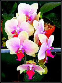 Orchids| Flickr