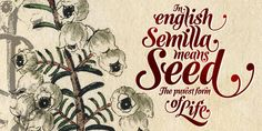 [font] Semilla by Alejandro Paul- Script Fonts, Cool Fonts, Scrapbook Pages, Signage, Hand Lettering, Illustration Art, Stationery, Typography, Graphic Design