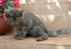 #kitten #cat #holyshitcat #holy shit cat #cats