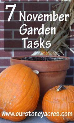 7 November Garden Tasks