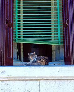 CÅt§ in =^.^= the window