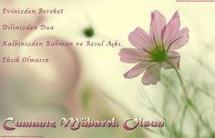 En çok paylaşılan resimli cuma mesajları Islam, Herbs, Flowers, Plants, Herb, Plant, Royal Icing Flowers, Flower, Florals