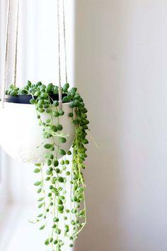 Senecio rowleyanus, conhecida popularmente como colar-de-pérolas, essa espécie é bastante utilizada em jardins verticais (Foto: Pinterest/Reprodução)