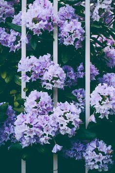 violet is a nice colour.