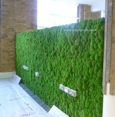 Preserved Bun Moss Wall with sections cut out for Sockets