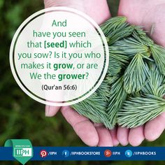 And have you seen that [seed] which you sow? Is it you who makes it grow, or are We the grower? (Qur'an 56:6) www.iiph.com