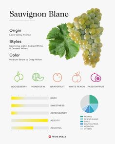 May is officially How are you celebrating? Are you going Old World or New World? What are some of your favorite wineries and regions out there? Check out our Enthusiast's Guide to Sauvignon Blanc in the link above! Wine Facts, Wine Folly, Wine Varietals, Wine Education, Vitis Vinifera, Wine Cheese, Italian Wine, Sauvignon Blanc, Wine And Beer