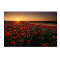 'Sunrise Between Poppies' Photographic Print on Wrapped Canvas