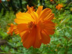 Bright summer bloom