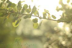Dreamy Summer Mornings - Snapshots by Kyra