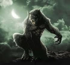 Werewolf: Another term used for them is Lycanthrope. Under a full moon, they were men who turned into wolf-like creatures. Werewolf trials occurred in. Mythological Creatures, Fantasy Creatures, Mythical Creatures, The Beast, Van Helsing Werewolf, Wolf Hybrid, Werewolf Art, Werewolf Legend, Vampires And Werewolves