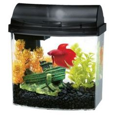 1000 images about fish tanks on pinterest fish tanks for Fish tank for kids