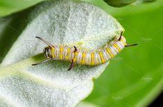Caterpillar by Yongkiet on @creativemarket