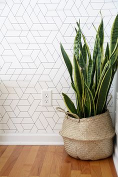 Modern Wallpaper with Snake Plant in BasketYou can find Wallpaper accent wall and more on our website.Modern Wallpaper with Snake Plant in Basket Wallpaper Accent Wall Bathroom, Hallway Wallpaper, Look Wallpaper, Plant Wallpaper, Wallpaper Decor, Snake Wallpaper, Office Wallpaper, Wallpaper Ideas, Wallpaper For Home