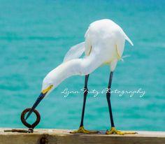 bird with eye hook