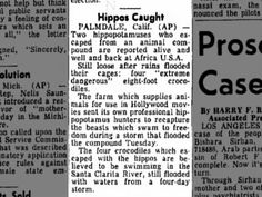 27 FEB 1969 -- The Daily Republic (Mitchell, South Dakota) ... HIPPOS CAUGHT