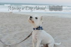 the expat diaries | tips for moving a pet abroad via www.postcardsfromrachel.com