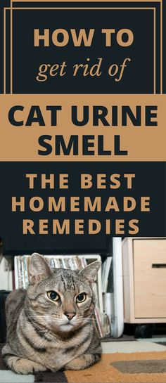 How To Get Rid Of Cat Urine Smell U2013 The Best Homemade Remedies