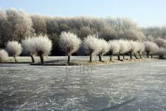 winter-in-nederland-met-ijs-op-de-bomen