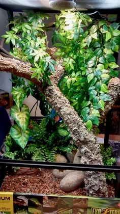 20 gallon desert vivarium leopard gecko reptile. Black Bedroom Furniture Sets. Home Design Ideas